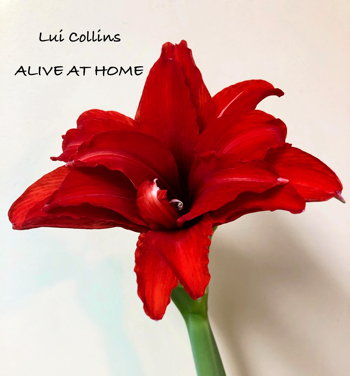 Alive At Home cover